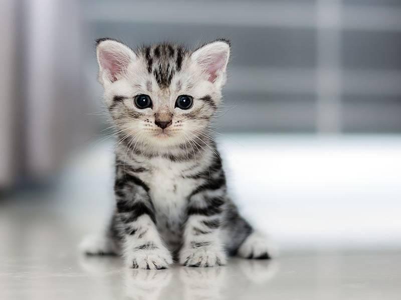 The Baby Cat
